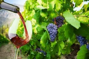Table Mountain & Constantia Wine Estate Private Combo Tour