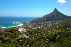 Table Mountain: Gentle Guided Meander for the Whole Family