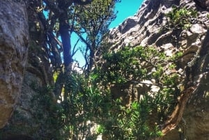 Table Mountain: Tranquility Cracks Hike