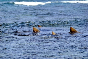 Cape Verde: Shark Bay Experience