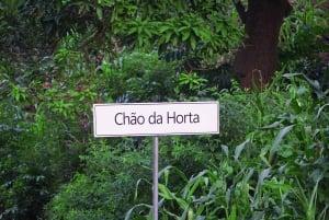 From Praia: Serra Malagueta & Principal Chão da Horta Trek