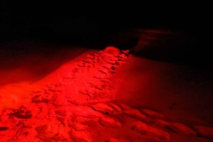Sal: Sea Turtle Watching Experience at Night