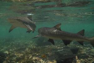 Shark Bay Experience