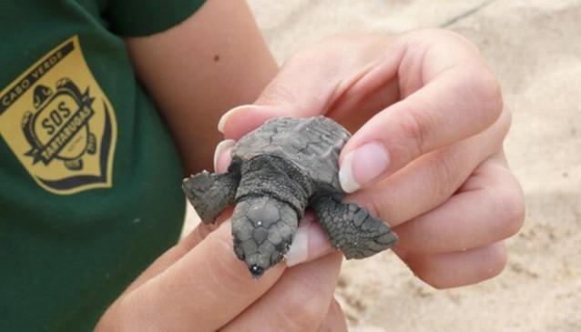 Turtle SOS Cabo Verde