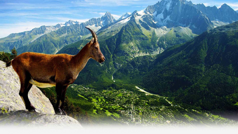 My Guide Chamonix