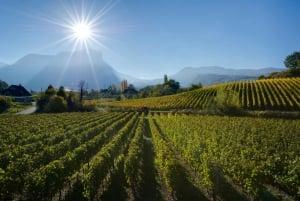 Aix-les-Bains/Chambéry: Savoie Vineyards Experience