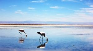 Atacama Salar