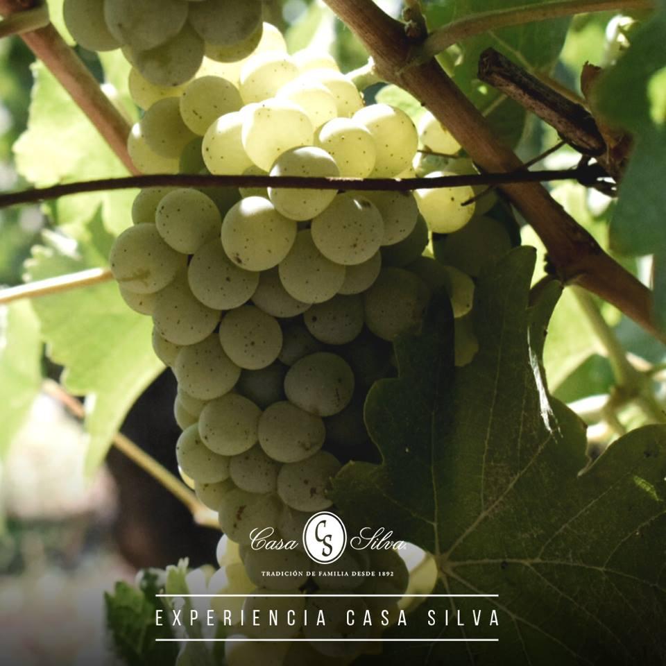 Casa Silva Winery