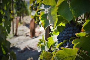 Errazuriz Winery