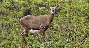 Futaleufu National Reserve