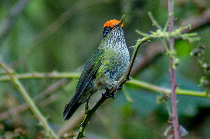 Gomez Carreño Natural Park