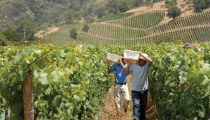 Morande Winery