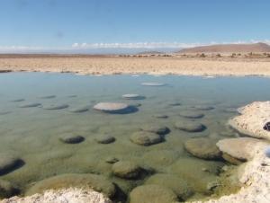 National Reserve Pampa del Tamarugal