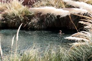 Puritama Hot Springs