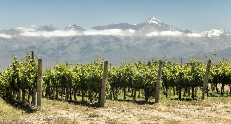 San Pedro Winery