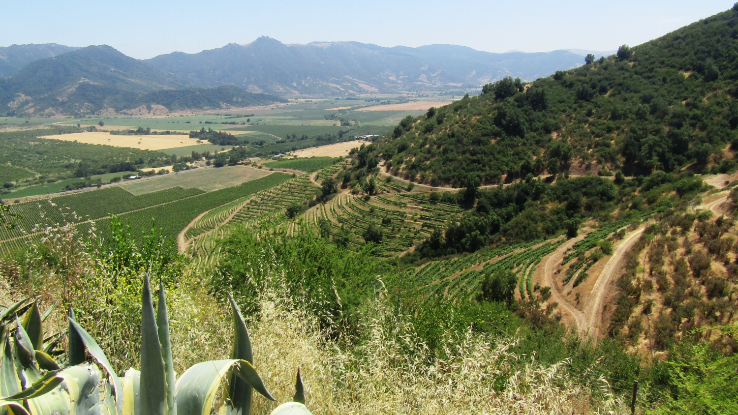 Things to do and see in Colchagua Valley