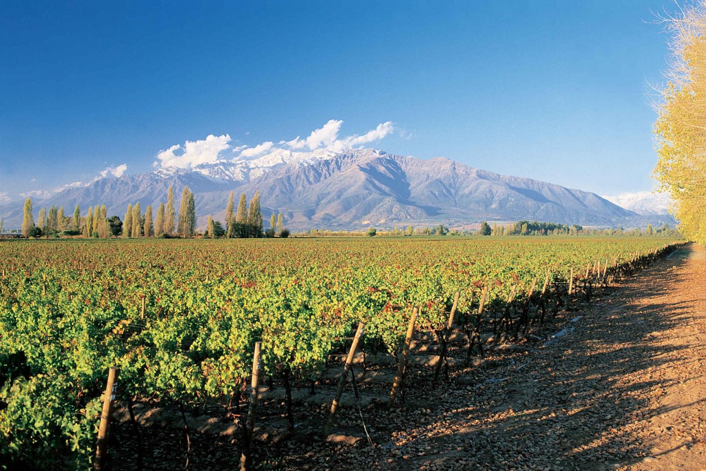 Santiago: Main Chilean Wineries Private Half-Day Tours