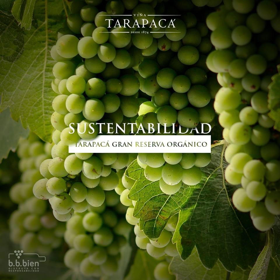 Tarapaca Winery