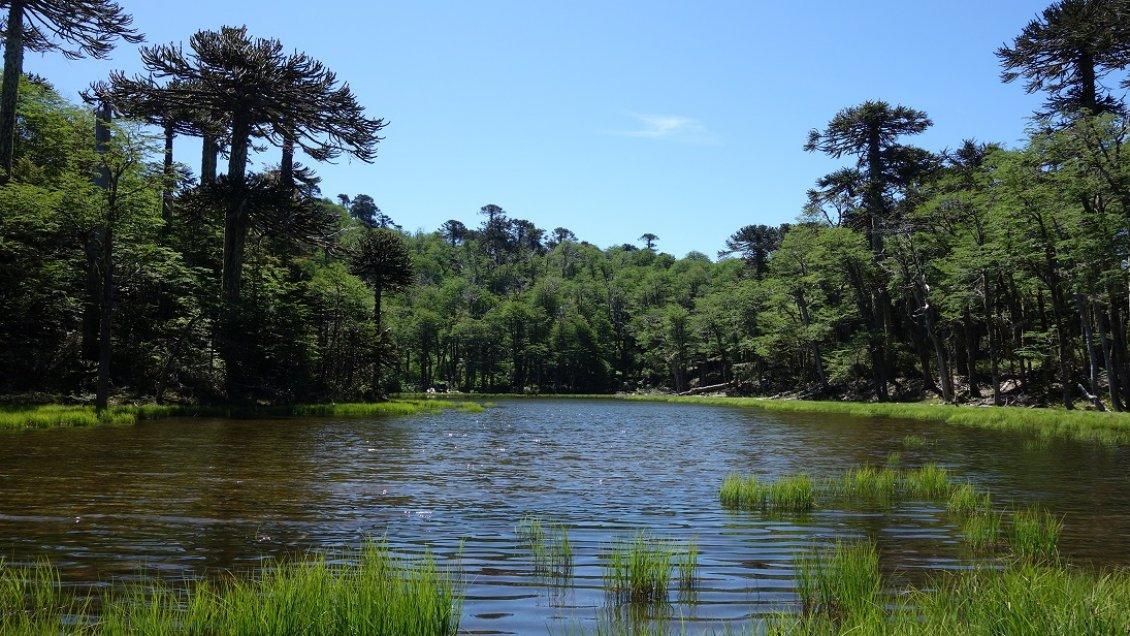 Tinquilco Lake