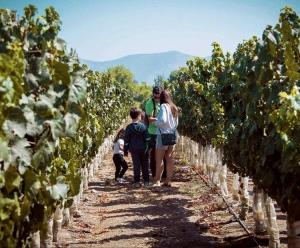 Undurraga Winery