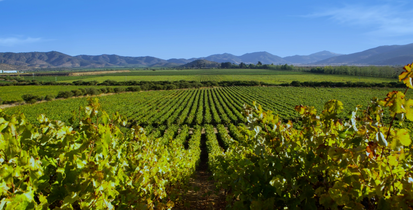 Best wine tours close to Santiago de Chile