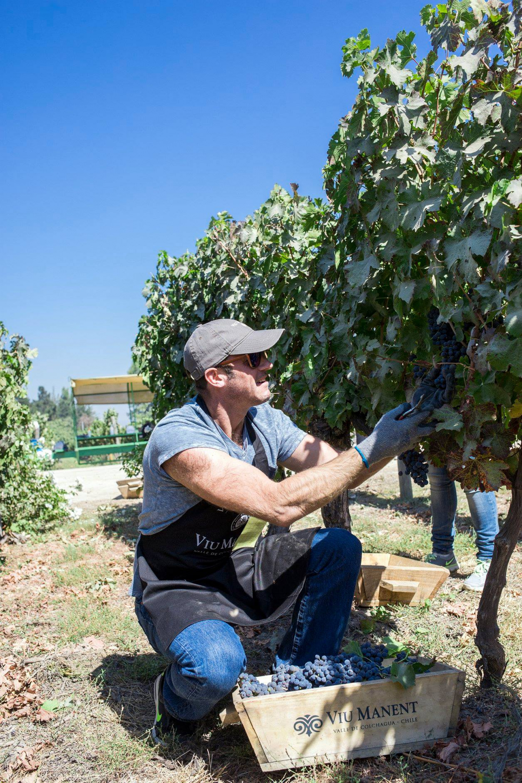 Viu Manent Winery