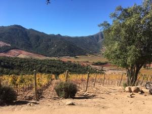 Winery Lapostole Chile