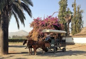 Carmenere Tour - Santa Rita Winery