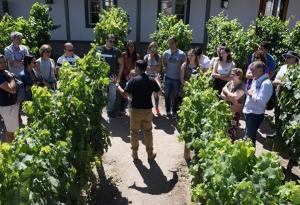 Classic tour - Santa Rita Winery