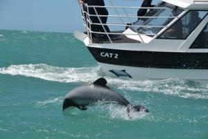 Black Cat Cruises