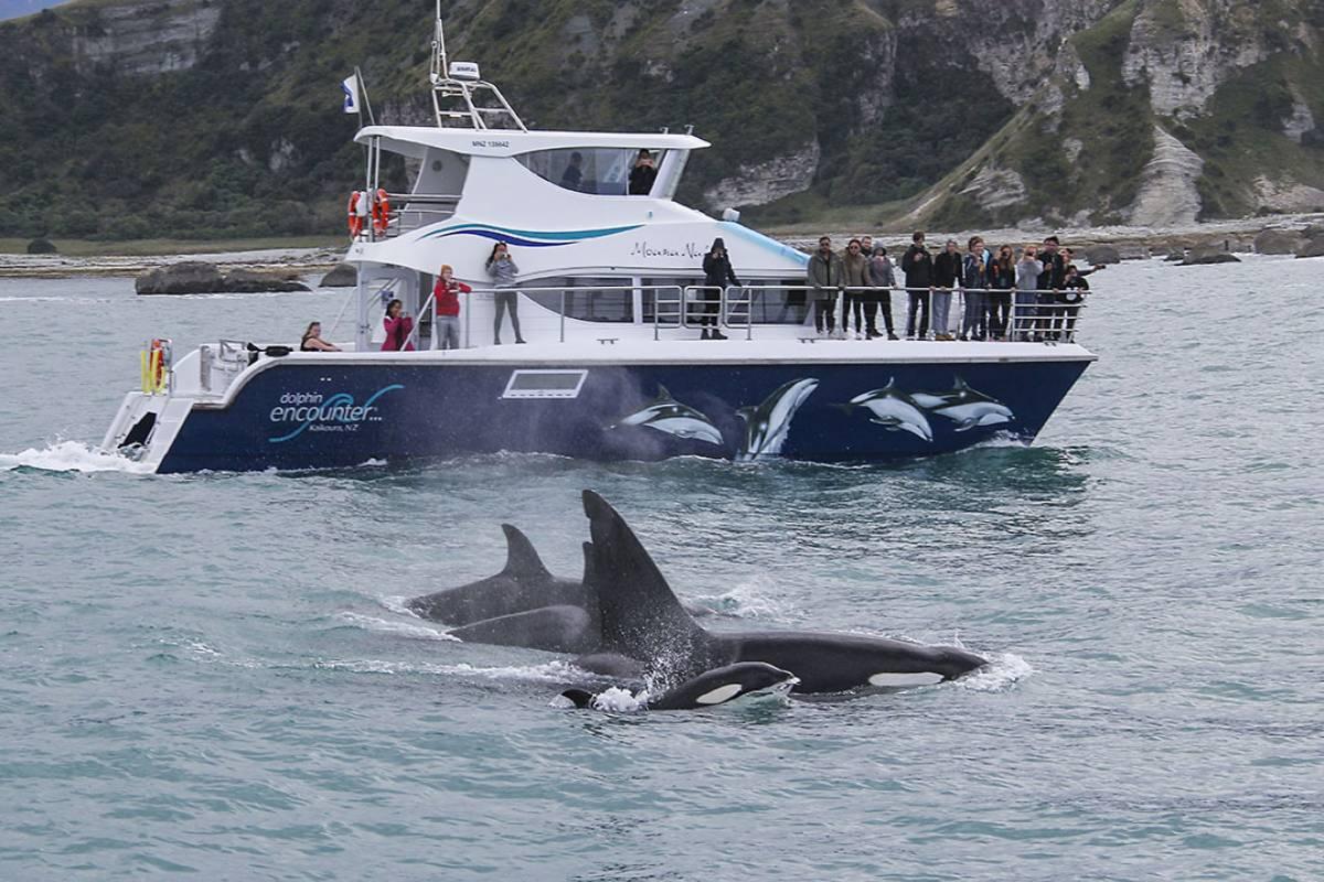 Dolphins  Encounters  Kaikoura