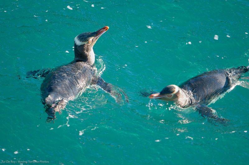 Evening Penguin Tours