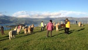 Shamarra Alpaca Farm Tours
