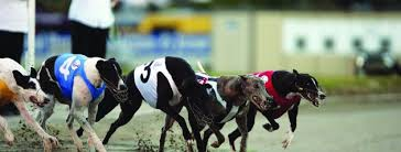 Christchurch Casino New Zealand Greyhound Cup