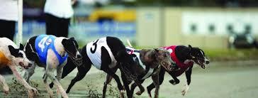 Christchurch Casino New Zealand Greyhound Cup