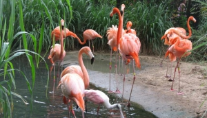 Barranquilla Zoo