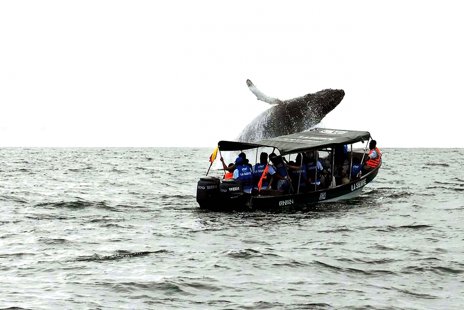 Cali: Whale Watching in the Colombian Pacific