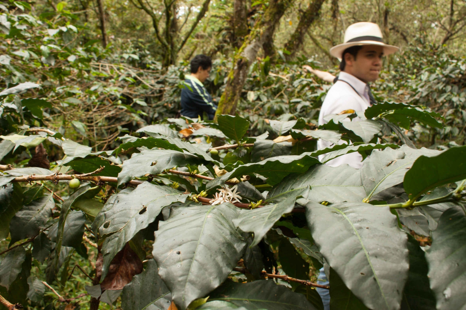 Colombian Coffee Farm Experience