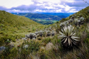 From Bogota: Chingaza National Park Eco Tour