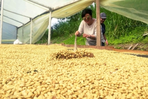 From Bogotá: Private Coffee Farm Full-Day Tour