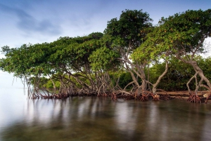 From Cartagena: Mangroves Trip With Lunch