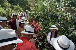 Medellín: Coffee Tour With Tastings and Lunch