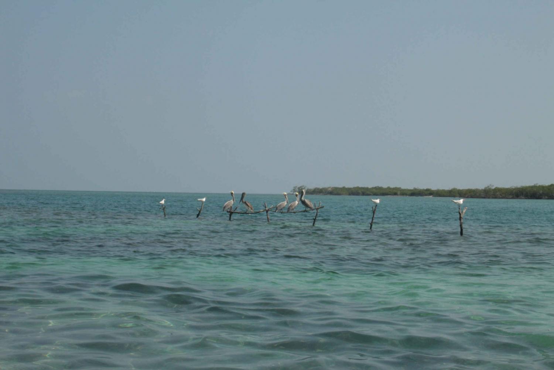 Rosario Islands Private Speedboat Tour from Cartagena
