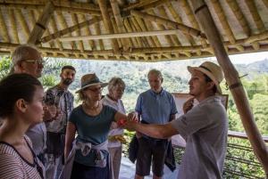 Salento: Private Hacienda Venecia Coffee Tour