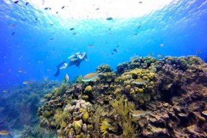 San Andres: SCUBA Diving Experience with Hotel Pickup