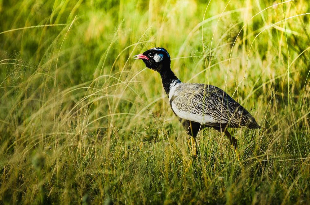 Best places for Birding in Botswana