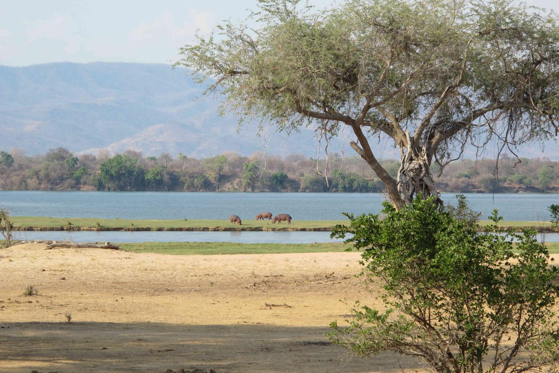 A Memorable Trip to Mana Pools Safari Lodge