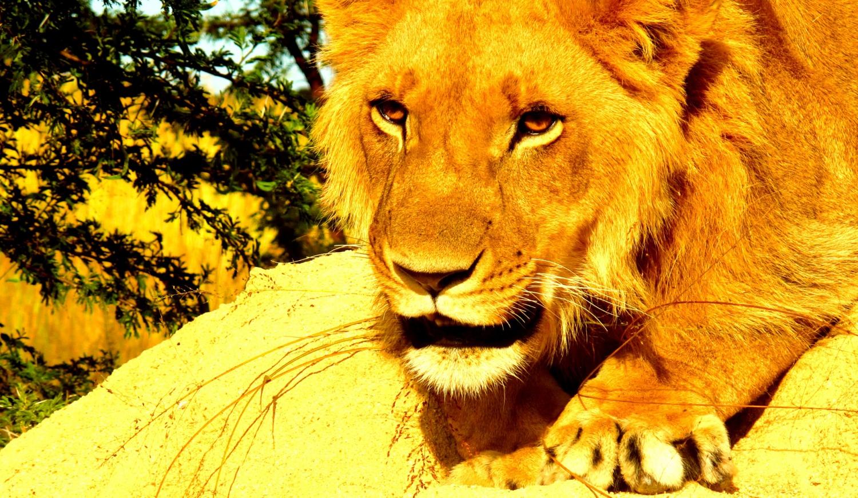 Antelope Park Escapade