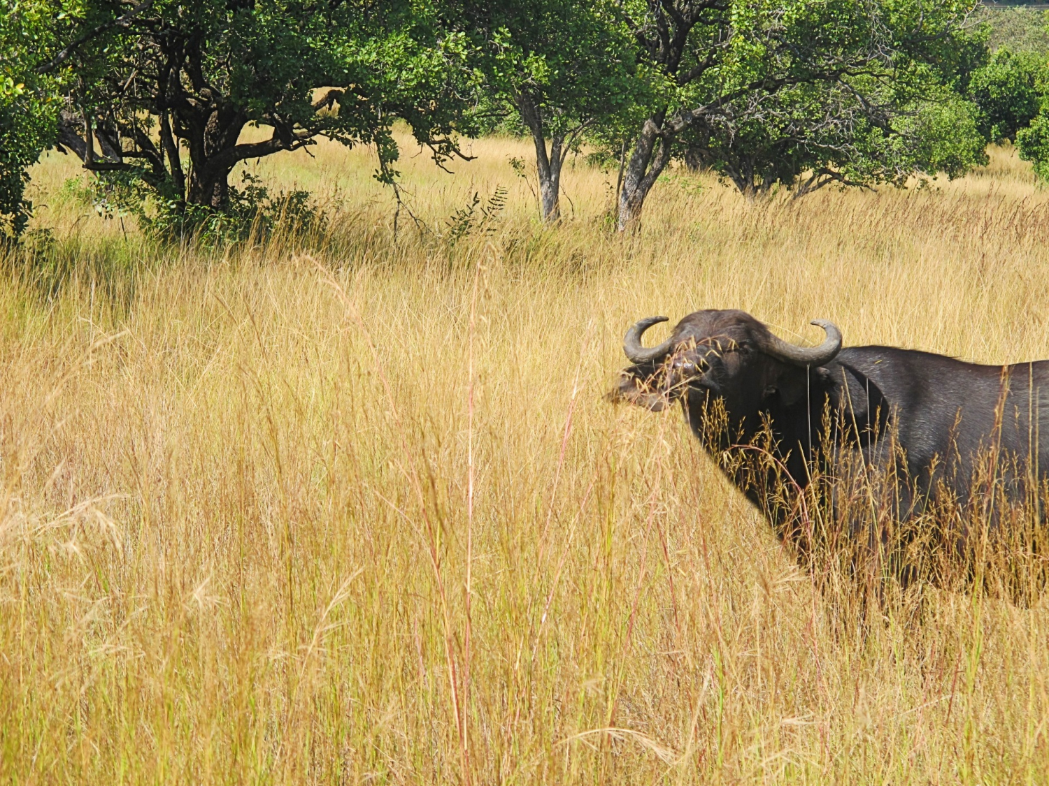 Best Day Trips - Harare