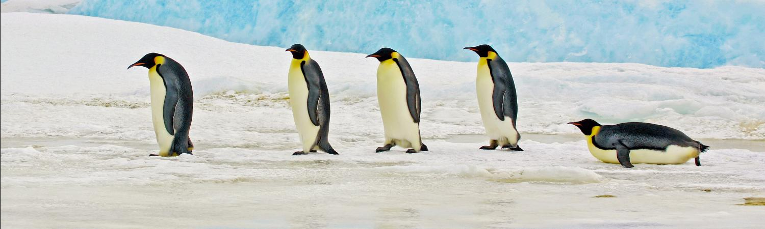 Discover the ideal places to see penguins